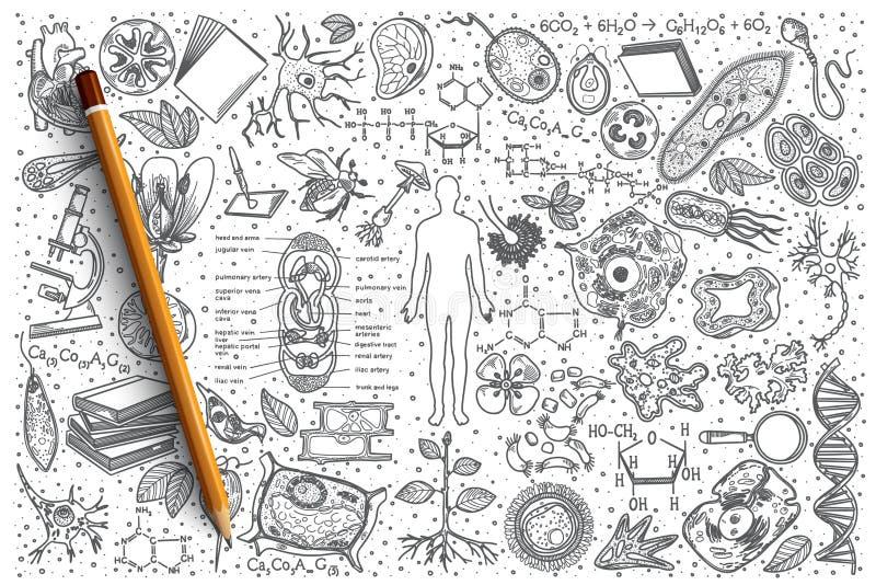 Συρμένο το χέρι διάνυσμα της βιολογίας doodle έθεσε διανυσματική απεικόνιση