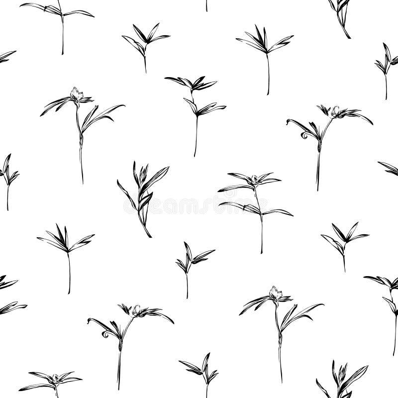 Συρμένο χέρι άγριο άνευ ραφής σχέδιο χορταριών Εγκαταστάσεις περιλήψεων wildflower που χρωματίζονται από το μελάνι Διανυσματικό σ διανυσματική απεικόνιση
