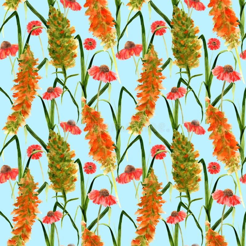 Συρμένο χέρι άνευ ραφής σχέδιο με τα άγρια κίτρινα λουλούδια watercolor, κόκκινο Echinacea, τα χορτάρια και τις χλόες σε ένα μπλε ελεύθερη απεικόνιση δικαιώματος