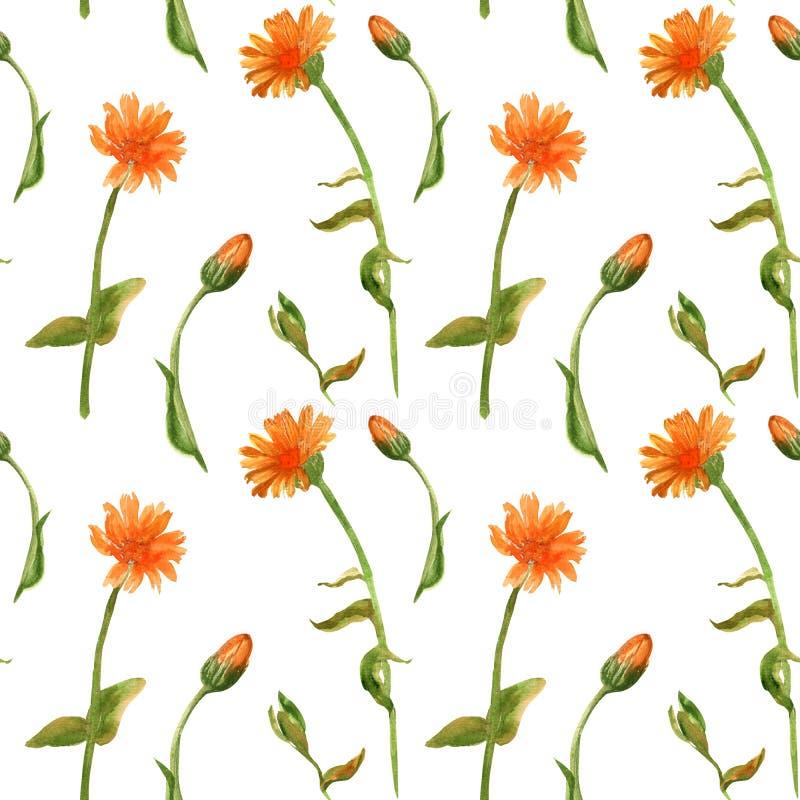 Συρμένο χέρι άνευ ραφής σχέδιο watercolor των officinalis calenula Σχέδιο για τις κάρτες, κλωστοϋφαντουργικό προϊόν, ύφασμα, τύλι διανυσματική απεικόνιση