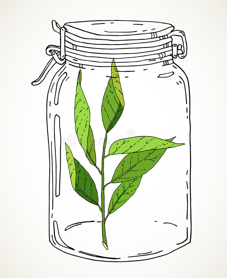 Συρμένο χέρι βάζο με τον πράσινο κλάδο διανυσματική απεικόνιση