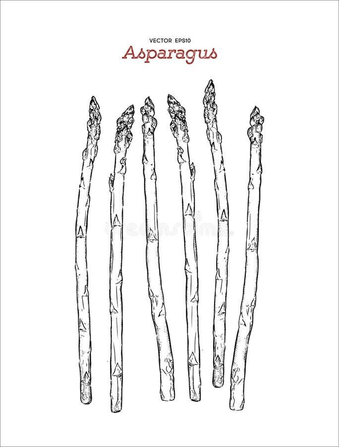 Συρμένο χέρι διάνυσμα σπαραγγιού ύφους σκίτσων απεικόνιση αποθεμάτων