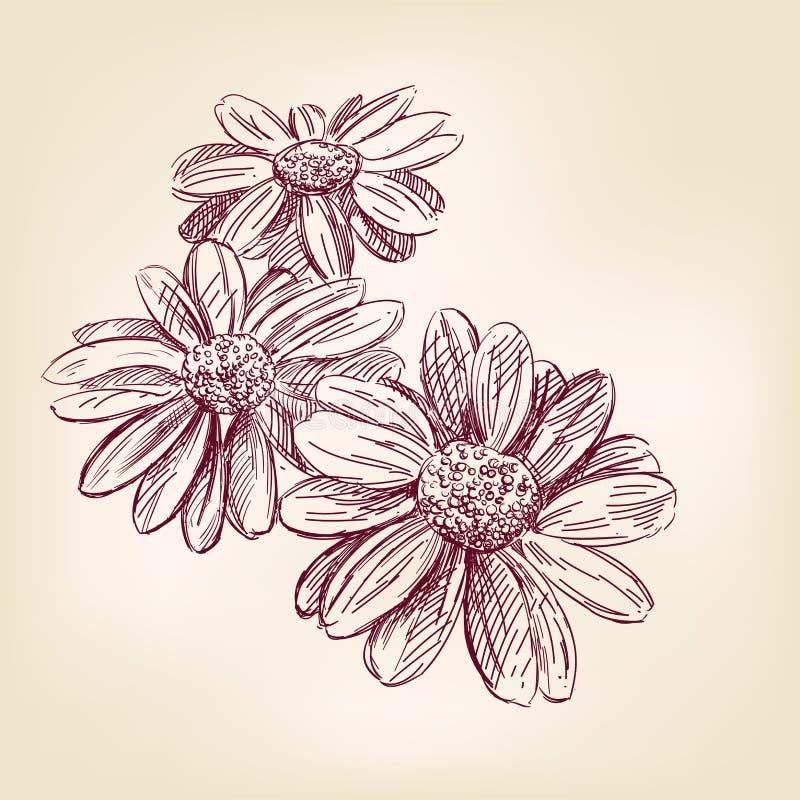 Συρμένο χέρι διανυσματικό σκίτσο της Daisy απεικόνιση αποθεμάτων