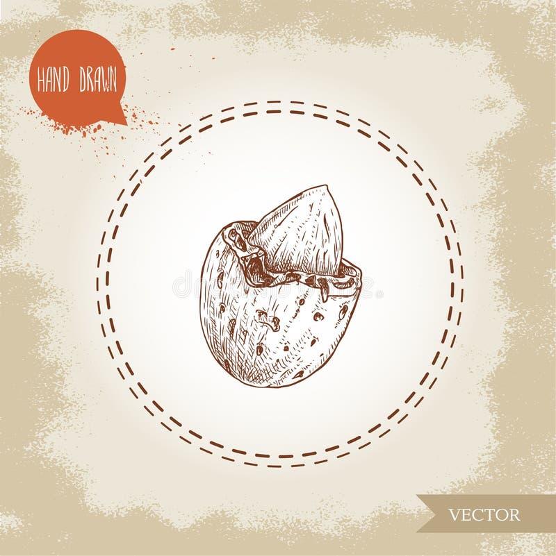 Συρμένο χέρι καρύδι αμυγδάλων σκίτσων Ξεφλουδισμένο καρύδι στο κέλυφος Ενιαίο οργανικό superfood που απομονώνεται στο παλαιό υπόβ ελεύθερη απεικόνιση δικαιώματος