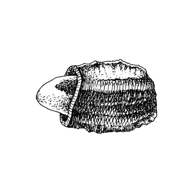 Συρμένο χέρι καρύδι της Βραζιλίας στο σπασμένο κοχύλι διανυσματική απεικόνιση