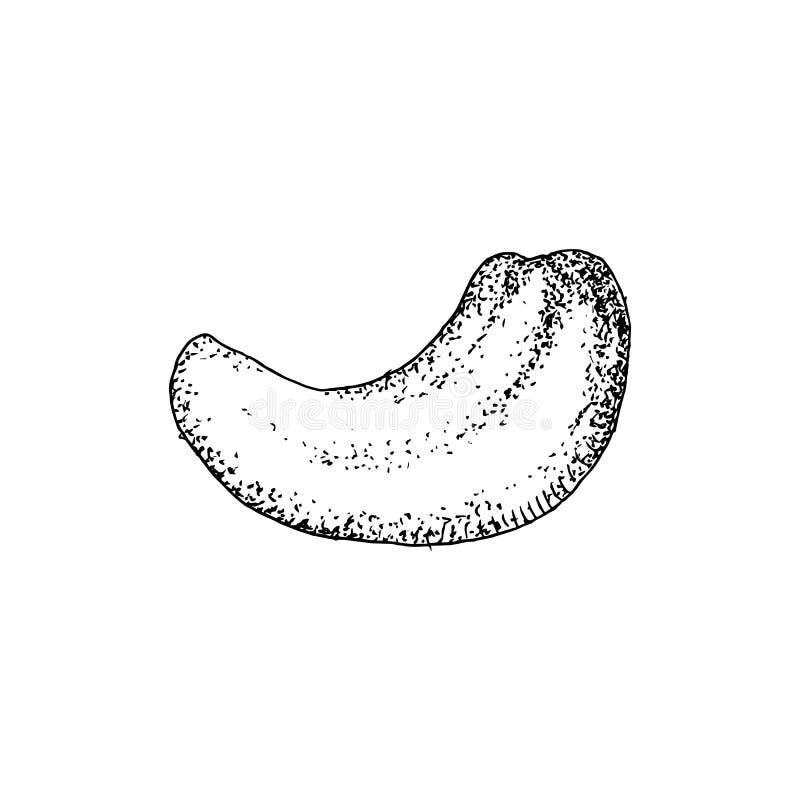 Συρμένο χέρι καρύδι των δυτικών ανακαρδίων που απομονώνεται στο άσπρο υπόβαθρο ελεύθερη απεικόνιση δικαιώματος