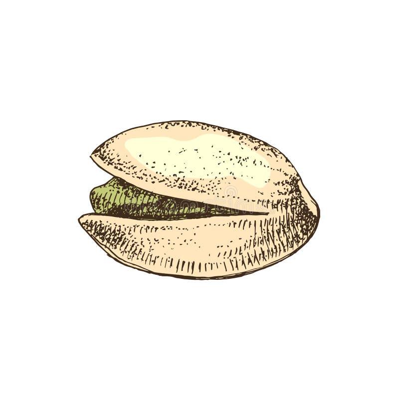 Συρμένο χέρι καρύδι φυστικιών σε ένα κοχύλι διανυσματική απεικόνιση