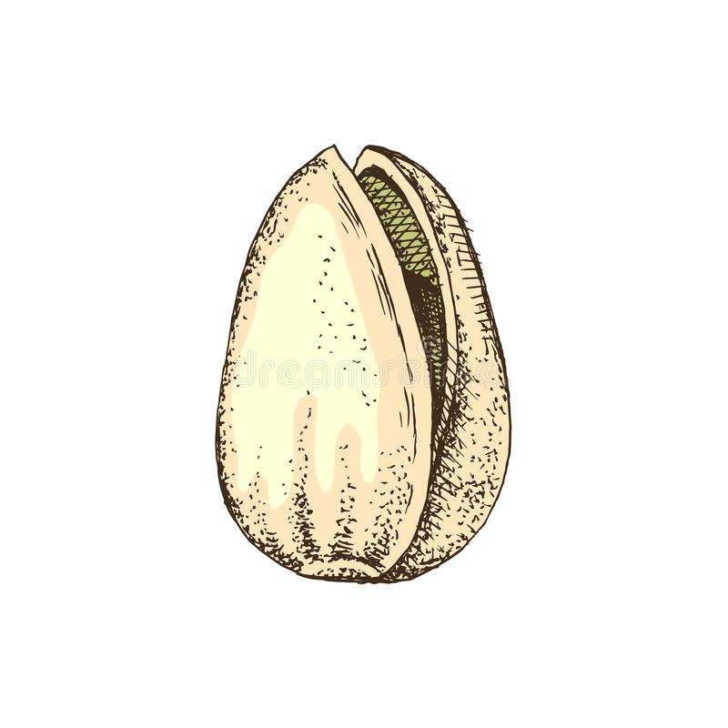 Συρμένο χέρι καρύδι φυστικιών σε ένα κοχύλι απεικόνιση αποθεμάτων