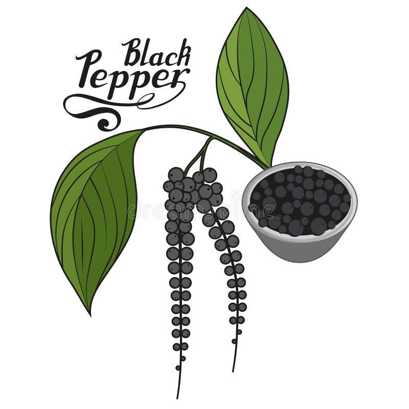 Συρμένο χέρι μαύρο πιπέρι, πικάντικο συστατικό, μαύρο λογότυπο πιπεριών, υγιής οργανική τροφή, μαύρο πιπέρι καρυκευμάτων στο άσπρ ελεύθερη απεικόνιση δικαιώματος