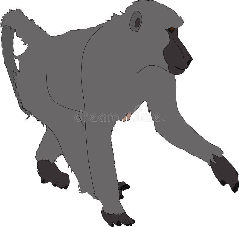 Συρμένο χέρι πορτρέτο άγριο baboon διανυσματική απεικόνιση