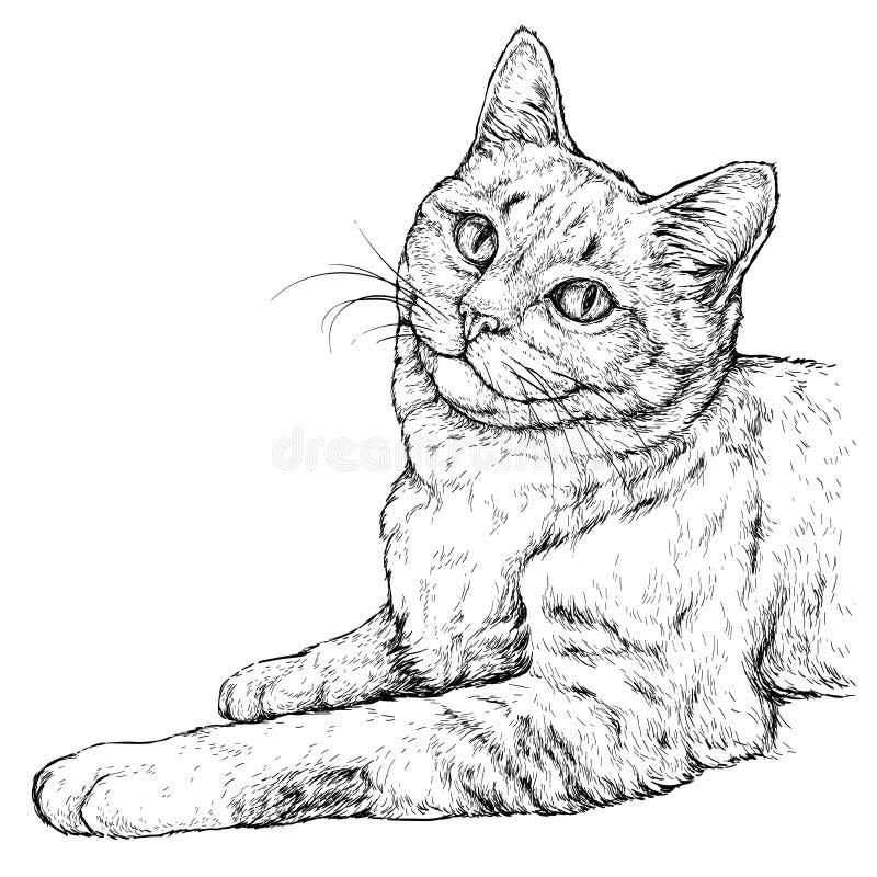 Συρμένο χέρι πορτρέτο της χαριτωμένης γάτας Απεικόνιση που απομονώνεται διανυσματική στο λευκό διανυσματική απεικόνιση