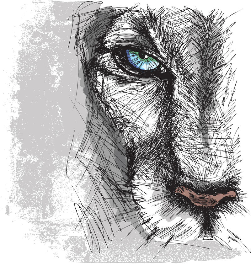 Συρμένο χέρι σκίτσο ενός λιονταριού ελεύθερη απεικόνιση δικαιώματος