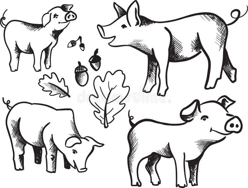 Συρμένο χέρι σκίτσο του χοίρου pork Διαφορετικός θέτει αστείος χοίρος Σύνολο χοίρων χοίροι μελανιού σκίτσων διάνυσμα Δρύινα φύλλο απεικόνιση αποθεμάτων