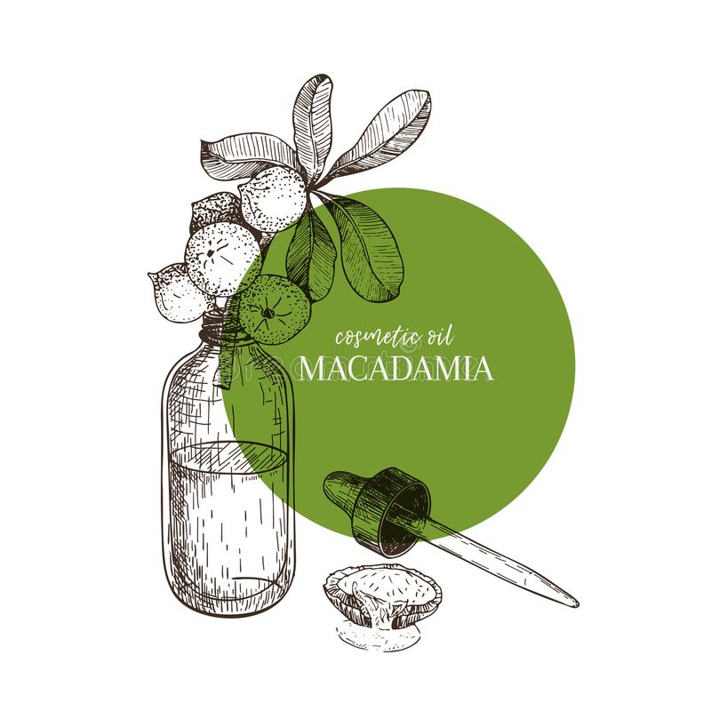 Συρμένο χέρι σύνολο ουσιαστικών πετρελαίων Διανυσματικό macadamia καρύδι Ιατρικό χορτάρι με dropper γυαλιού το μπουκάλι Χαραγμένη απεικόνιση αποθεμάτων