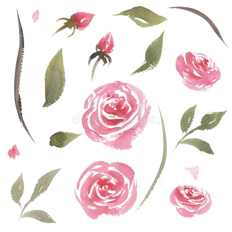 Συρμένο χέρι σύνολο watercolor εκλεκτής ποιότητας ρόδινων τριαντάφυλλων διανυσματική απεικόνιση