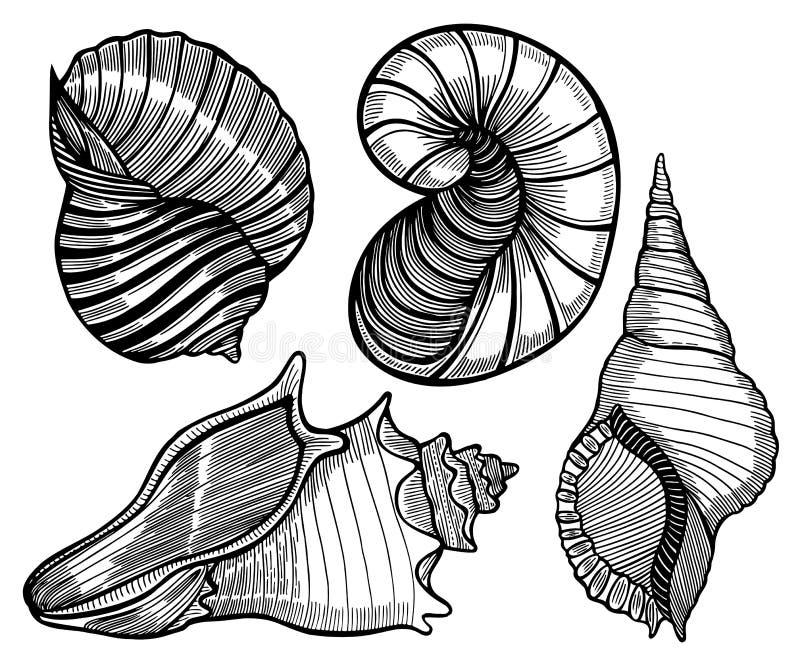 Συρμένο χέρι σύνολο διάφορου θαλασσινού κοχυλιού διανυσματική απεικόνιση