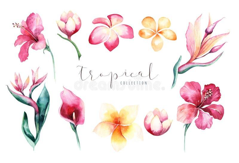 Συρμένο χέρι σύνολο λουλουδιών watercolor τροπικό Εξωτικά φύλλα φοινικών, δέντρο ζουγκλών, τροπικά στοιχεία βοτανικής της Βραζιλί απεικόνιση αποθεμάτων