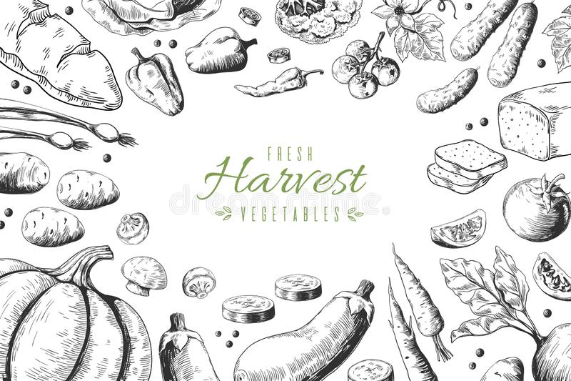 Συρμένο χέρι υπόβαθρο λαχανικών Σκίτσο οργανικής τροφής, υγιείς επιλογές εστιατορίων κήπων Διανυσματικό καλαμπόκι αγκιναρών καρότ διανυσματική απεικόνιση