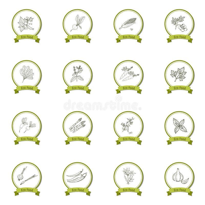 Συρμένο χέρι φυτικό σύνολο σκίτσων απεικόνιση αποθεμάτων