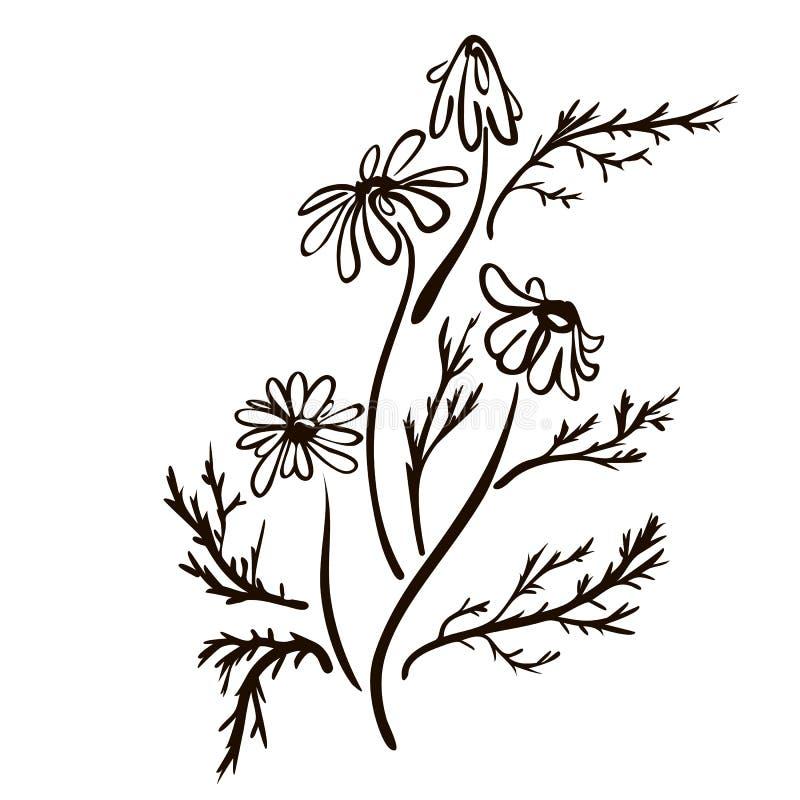 Συρμένο χέρι camomile εκλεκτής ποιότητας ύφος σκίτσων λουλουδιών E r απεικόνιση αποθεμάτων