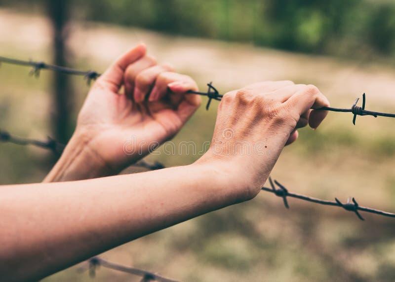 Συρματόπλεγμα και τα χέρια μιας κοπέλας Εννοιολογική σκηνή Πείνα για ελευθερία στοκ εικόνες