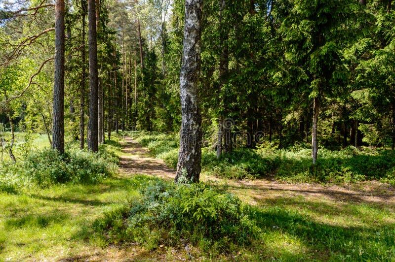 συστάσεις κορμών δέντρων στο φυσικό περιβάλλον στοκ εικόνες