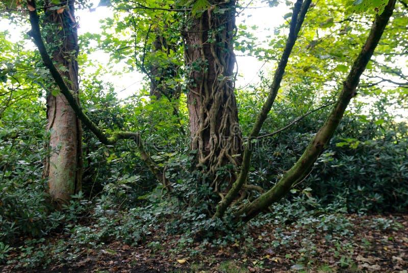 Συστροφή κορμού δέντρου στοκ εικόνες