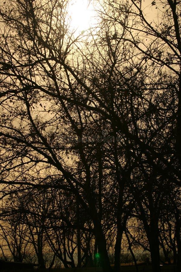 συχνασμένα δάση στοκ εικόνες