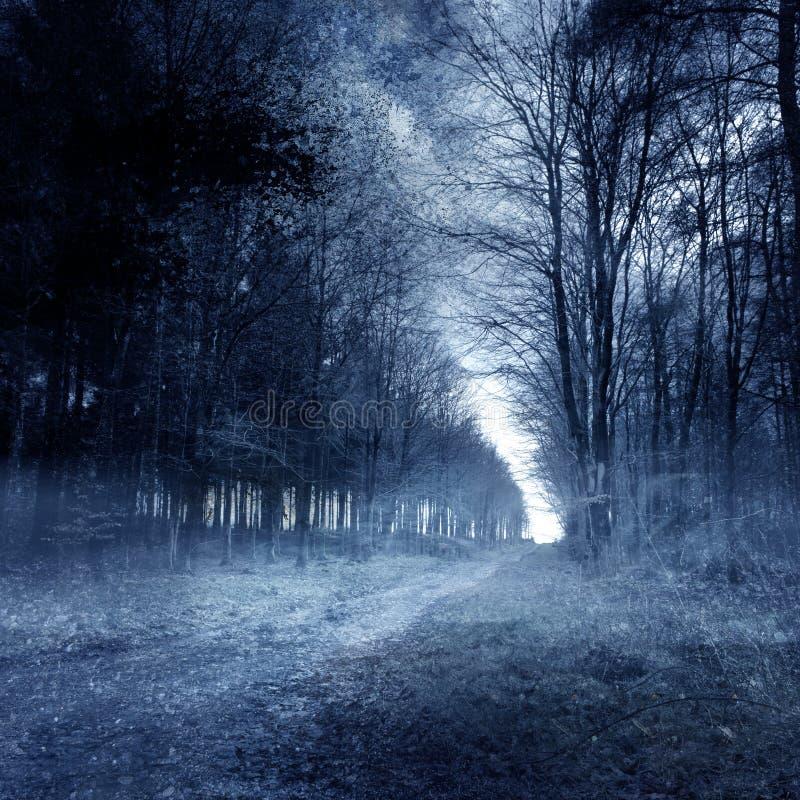 Συχνασμένο δάσος στοκ εικόνα