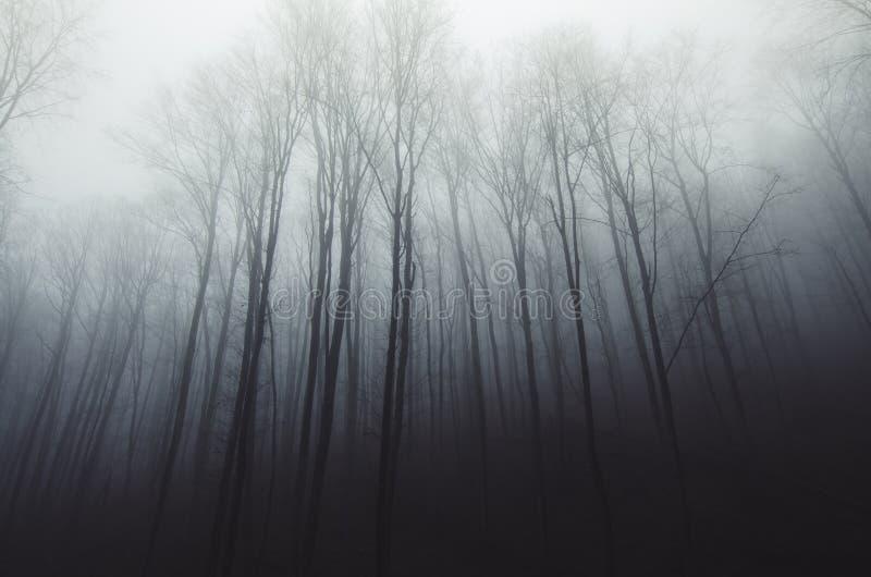Συχνασμένο σιωπηλό δάσος με την ομίχλη μέσω των δέντρων στοκ φωτογραφίες με δικαίωμα ελεύθερης χρήσης