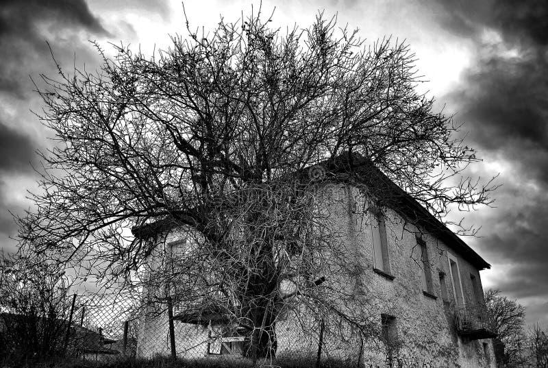 Συχνασμένο σπίτι σκηνής Ένα παλαιό εκλεκτής ποιότητας σπίτι με ανατριχιαστικό tree ag στοκ φωτογραφία