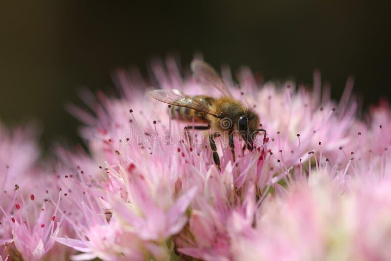 Συλλέξτε το μέλι στοκ φωτογραφία με δικαίωμα ελεύθερης χρήσης