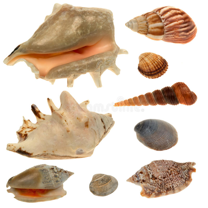 Συλλογή θαλασσινών κοχυλιών που απομονώνεται στο άσπρο υπόβαθρο στοκ φωτογραφίες