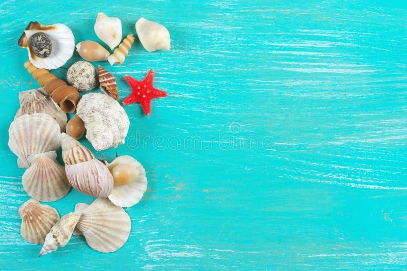 Συλλογή θαλασσινών κοχυλιών στοκ φωτογραφία με δικαίωμα ελεύθερης χρήσης