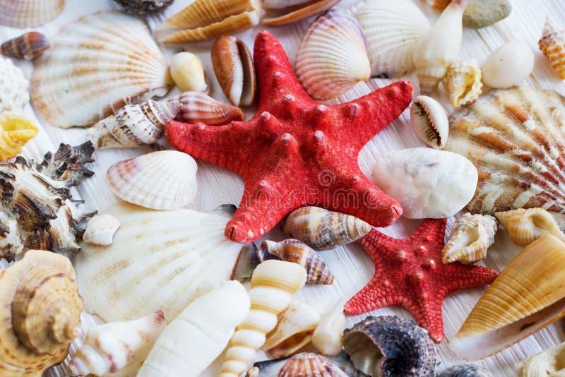 Συλλογή κοχυλιών θάλασσας στο άσπρο ξύλινο υπόβαθρο στοκ εικόνες με δικαίωμα ελεύθερης χρήσης