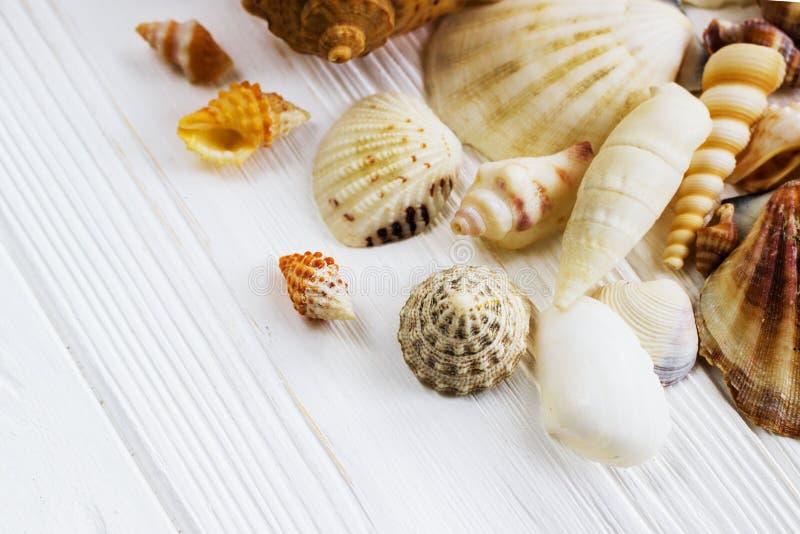 Συλλογή κοχυλιών θάλασσας στο άσπρο ξύλινο υπόβαθρο στοκ εικόνα