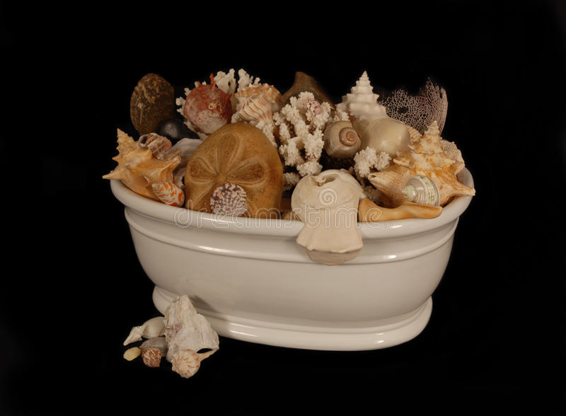 Συλλογή της Shell θάλασσας στοκ φωτογραφίες με δικαίωμα ελεύθερης χρήσης
