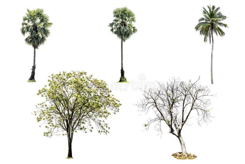 Συλλογή του δέντρου που απομονώνεται στο άσπρο υπόβαθρο στοκ φωτογραφίες με δικαίωμα ελεύθερης χρήσης