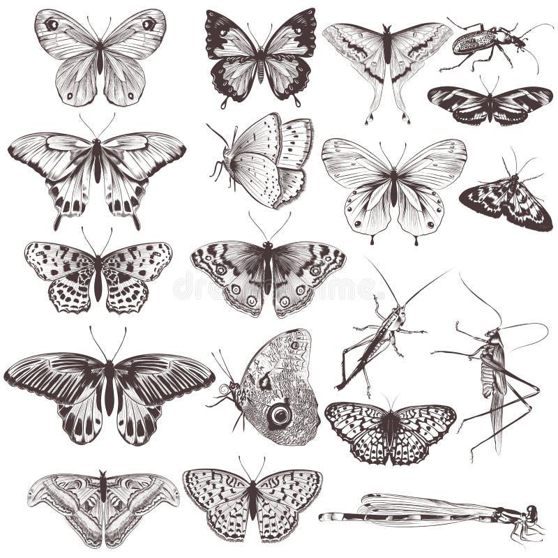 Συλλογή των διανυσματικών συρμένων χέρι πεταλούδων ελεύθερη απεικόνιση δικαιώματος