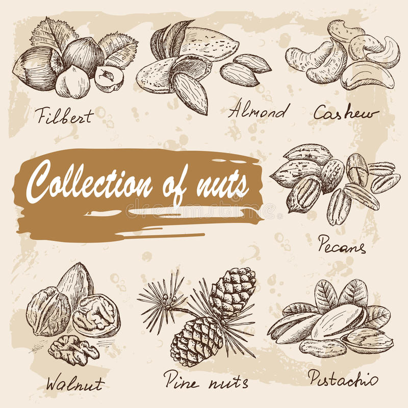 Συλλογή των καρυδιών απεικόνιση αποθεμάτων