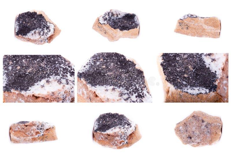 Συλλογή των ορυκτών δενδριτών πετρών των οξειδίων μαγγάνιου στοκ φωτογραφία
