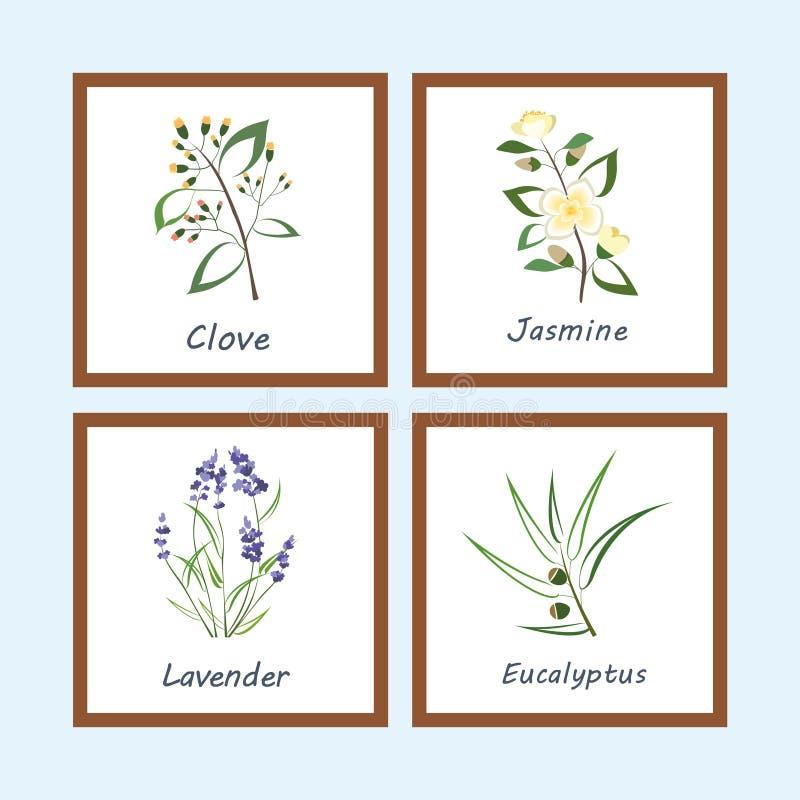 Συλλογή των χορταριών Ετικέτες για τα ουσιαστικά πετρέλαια και τα φυσικά συμπληρώματα Lavender, ευκάλυπτος, Jasmine, γαρίφαλο απεικόνιση αποθεμάτων