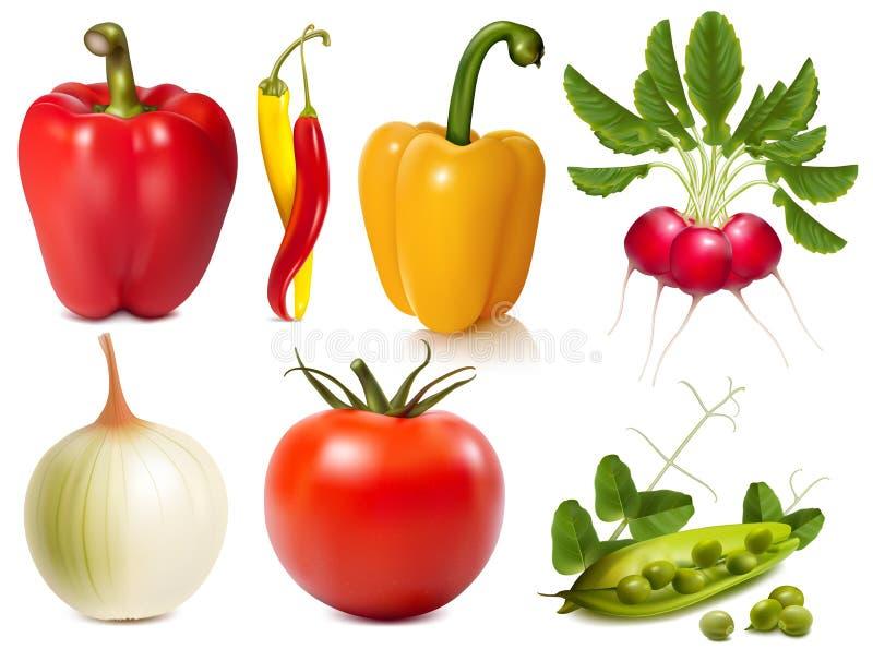 Συλλογή των διανυσματικών λαχανικών ελεύθερη απεικόνιση δικαιώματος
