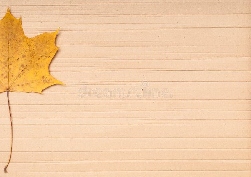 σφένδαμνος φύλλων χαρτονιού ανασκόπησης στοκ φωτογραφία με δικαίωμα ελεύθερης χρήσης