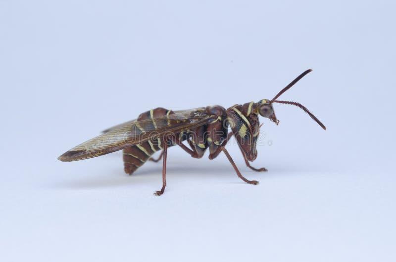 Σφήκα επίκλησης Mantis στοκ εικόνα με δικαίωμα ελεύθερης χρήσης