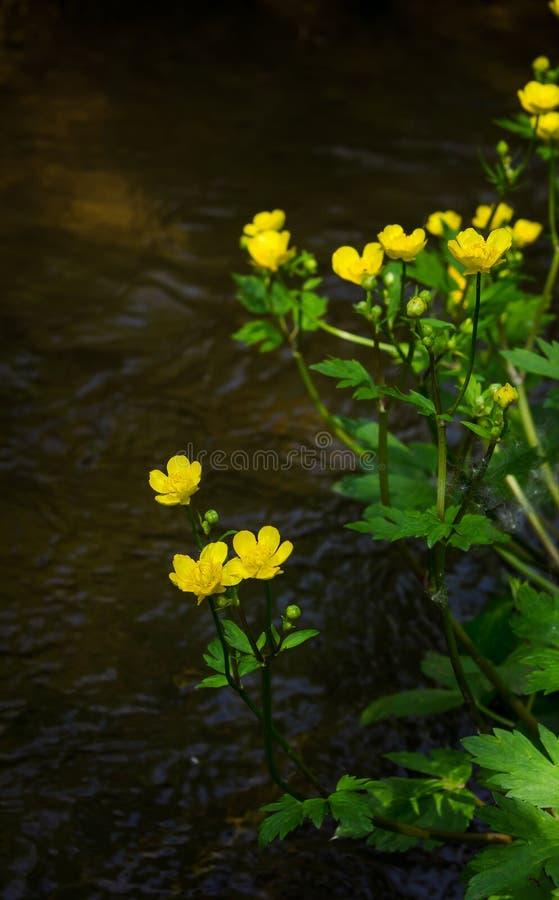 Σφαίρα-από το λουλούδι στον ποταμό στοκ εικόνα