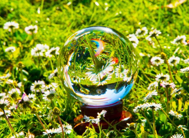 Σφαίρα κρυστάλλου που απεικονίζει ένα πράσινο λιβάδι και τις μαργαρίτες στοκ εικόνα