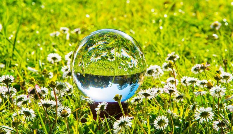 Σφαίρα κρυστάλλου που απεικονίζει ένα πράσινο λιβάδι και τις μαργαρίτες στοκ φωτογραφία με δικαίωμα ελεύθερης χρήσης
