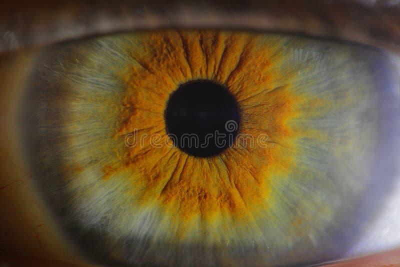Σφαίρα ματιών στοκ φωτογραφία με δικαίωμα ελεύθερης χρήσης