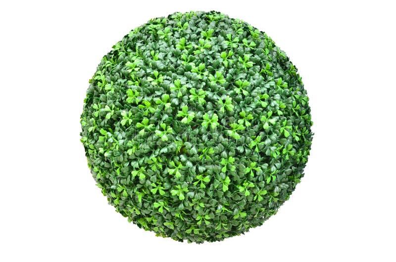 Σφαίρα πράσινων φυτών που απομονώνεται στο λευκό στοκ φωτογραφία με δικαίωμα ελεύθερης χρήσης